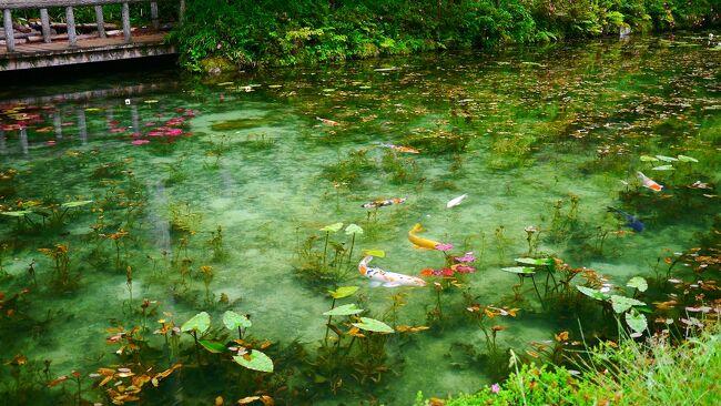 2019年初夏の旅<br />2日目は愛知県から岐阜県へ向かいます!<br />朝からあいにくの雨だったから根道神社の名もなき池も期待半分(*´ω`*)<br />とりあえず...行ってみよう!<br /><br />駐車場も空いていたのでやっぱりな~と思っていたら(。゚ω゚) ハッ <br />結果は写真でご覧ください。<br /><br />----------------2日目スケジュール--------------------<br />07:30 愛知出発<br />09:23 根道神社駐車場<br />09:30-10:05 根道神社<br />10:20 徳兵衛茶屋駐車場<br />10:35-11:10 徳兵衛茶屋