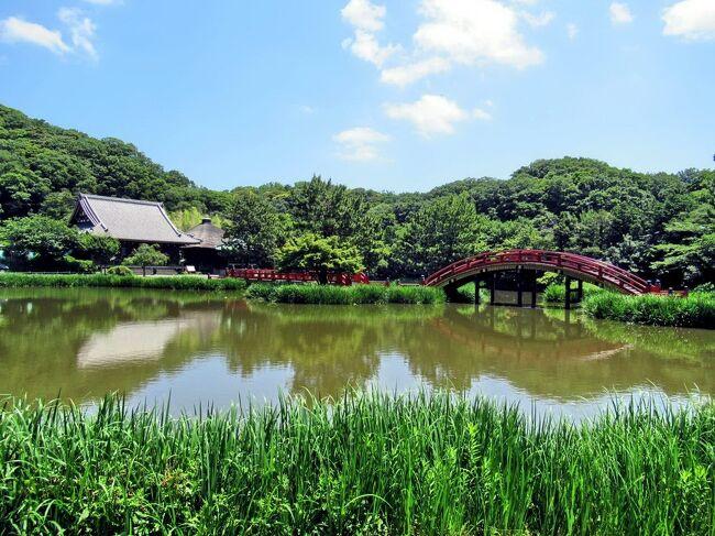 6月の○○会行事は、金沢文庫と日産自動車・追浜工場の見学会。<br />梅雨の晴れ間の一日、仲間8名で出かけました。<br /><br />京浜急行・追浜駅から2つ手前の金沢文庫駅で電車を降りて、20分ほど坂道を登って行くと、鎌倉時代中期に金沢郷(現在の横浜市金沢区)を本拠地とした北条氏の一族・金沢流北条氏の北条実時が創設した日本最古の武家文庫「金沢文庫」と、金沢流北条氏の菩提寺である「称名寺」があります。<br />名前だけは知っていた「金沢文庫」とはどんなものか興味がありましたが、現在は「神奈川県立金沢文庫」として、称名寺が所有する国宝や重要文化財など鎌倉時代のものを中心とした所蔵品を保管・展示する博物館になっていました。<br /><br />午後の追浜工場見学では、ベルトコンベアの上で車が組み立てられていく様子を見学しましたが、1つのラインで車種や色の違う車が次々と流れていく風景は躍動感があり、興味深いものでした。<br /><br />写真は、称名寺の境内に広がる阿字ヶ池と、池に姿を映す反橋・平橋・金堂。