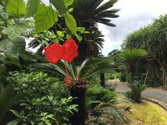 バニラで行くお得な梅雨の奄美大島旅行