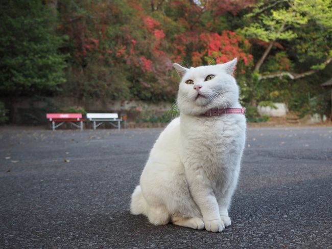 平成最後に4月駆け込みな感じでいくつかの寺社へ参拝して御朱印を頂いてきました。<br /><br />群馬の次は栃木県の佐野市にある唐澤山城跡にある唐澤山神社へ参拝しに行きました。<br />ココは唐澤山神社へ参拝が1番の目的でなく、そこで飼われてる猫ちゃん達に会いに行く方がメインになってます。<br />猫ちゃんに癒されつつ、神社参拝、御朱印も頂いてきました。<br /><br />よければ御覧になって下さい^^<br />