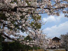 春の京都2019 一人旅 その1 ~東本願寺・渉成園・神泉苑~