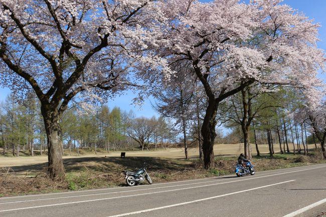 春の桜をまとめてみました。<br /><br />今年は、4月1日東京から始まって、GWまで桜を見ることができました。<br /><br />4月6日~21日に行ったお花見の写真です。