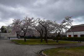 越後の国初訪問(1) 新潟市内2時間観光タクシーにて