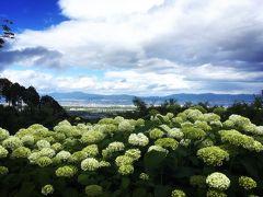 京の週末 紫陽花をもとめて西山へ 後編 ~西国三十三所 第二十番札所 善峯寺~