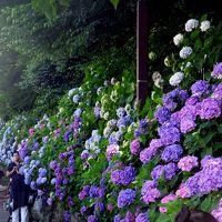 飛鳥山公園 紫陽花 (4月の桜も)