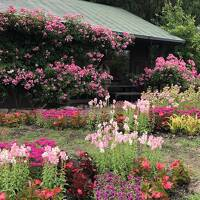 ラベンダーのくじゅう花公園と池山水源とガンジー牧場と高原ランチバイキング