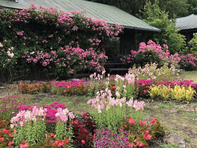 2019年6月16日(日)第一観光主催日帰りバスツアーで「ラベンダーのくじゅう花公園と池山水源とガンジー牧場と高原ランチバイキング」に参加しました。美しい花々に癒され、美味しいランチに満足できた1日でした。<br /> 主な行程は以下の通りです。<br />小倉→古賀→博多→基山→レゾネイトクラブくじゅう→ガンジー牧場→くじゅう花公園→産山村植木→池山水源→基山→博多