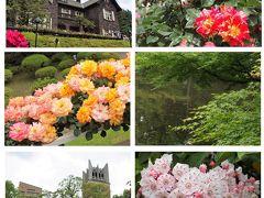 薔薇の旧古河庭園とカルミア咲く大隈庭園