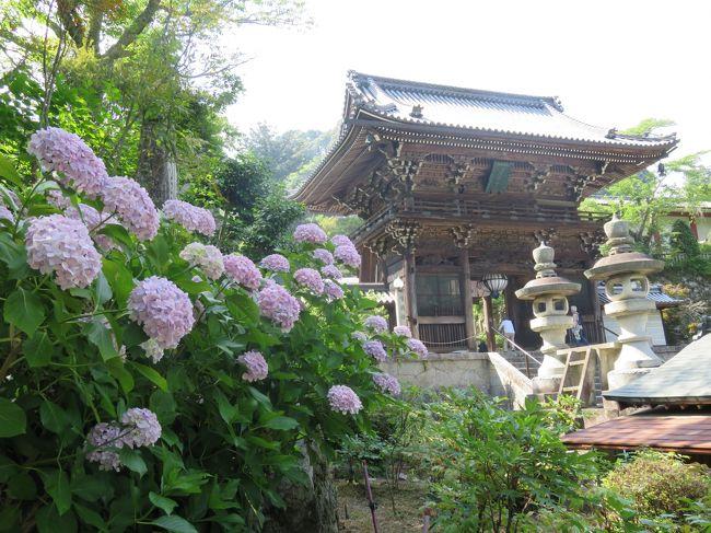 最近花の写真を撮りに行ってないのと、運動不足なのを鑑みて奈良県桜井市の長谷寺に紫陽花見物に行きました。<br /><br />長谷寺には何度か行ったことがあり、紅葉と牡丹の時期は見てますが紫陽花は初めてなので、楽しみにして行きました。