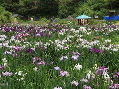 西新宿おじいちゃんとおばあちゃんの花しょうぶ園 兵庫県佐用町