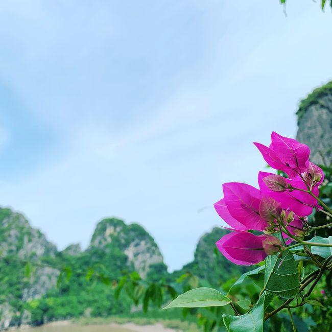香港旅行のはずが…ベトナムに行きたくなり、<br />首都のハノイ旅行を後から付けましたが、<br />メインになってしまいました。<br />ハノイ4泊と香港2泊の旅行記珍道中です!<br /><br />《ベトナムで体験したいこと》<br />☆世界遺産のハロン湾に行きたい!<br />☆人生未体験の『フォー』を食したい!<br />☆エッグコーヒー飲みたい!<br />☆蓮の花をみたい!<br />☆エステ…できればネイルもした~い!<br />☆水上人形劇をみたい!