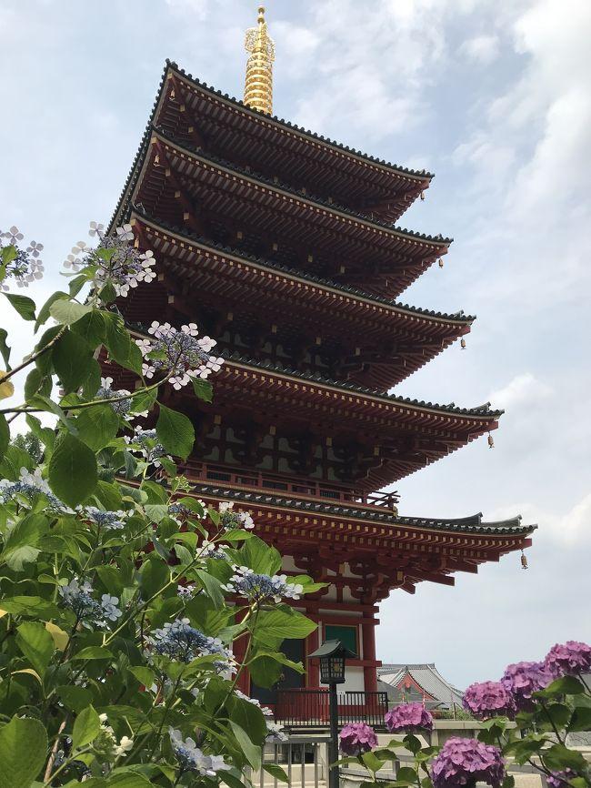 花を求めて⑬紫陽花満開の高幡不動で四国88カ所札所巡り