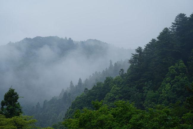 梅雨の季節。<br />旅好きにとっては、雨もまた楽し。<br />と言うことで、ふらりと出掛けることにした。<br />向かった先は、奥武蔵秩父。<br />秩父では龍神木に出会い、奥武蔵では山間の宿で緑と清流に癒される旅となった。