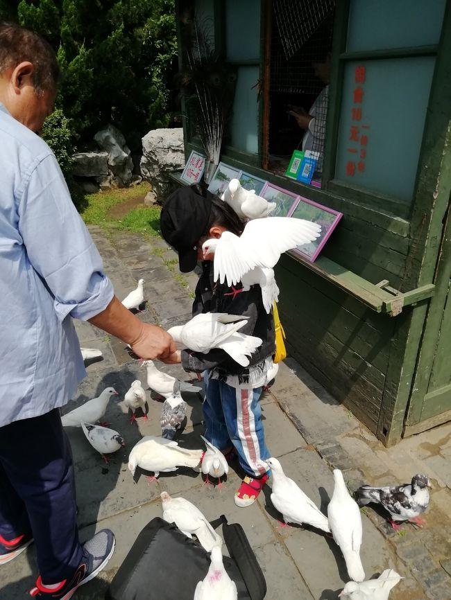 揚州徘徊♪痩西湖風景区♪子供が白鳩に襲われた!孔雀と写真を撮る!風情がある玉版橋♪2019年6月 中国 揚州・鎮江 7泊8日(個人旅行)22