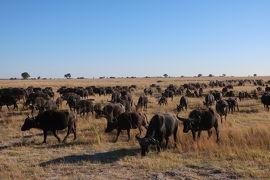 感動の大地  南アフリカ12日間  ①チョべ国立公園 ボツワナ