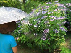 旅するイルカ♪緑花センター 紫陽花観賞へ