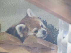母子で福岡・佐賀 Vol.4☆☆福岡県 福岡市動植物園☆