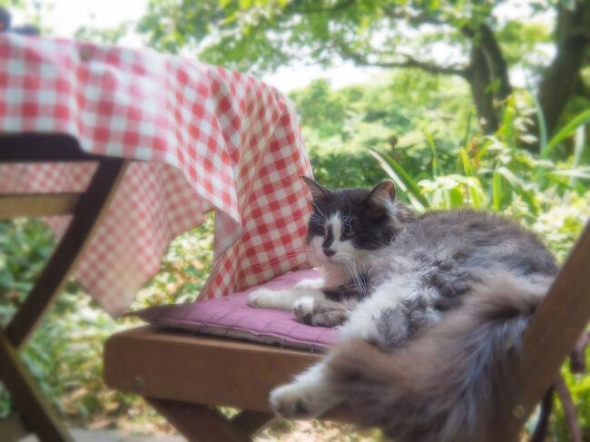 梅雨時期のどこかに行きたい病発症。<br />で。健保組合のホテルが空いてたので<br />一泊してきました。<br /><br />ホテルに着くまで途中どこかに寄れないか<br />考えてみたところ、思いついたのが<br />4トラベラーみささんが数々の美しい写真を<br />撮っている、猫がいるバラ園。<br /><br />バラの時期はもう終わりといった感じ<br />だったけど、ネコが。。人懐っこすぎて<br />ちょっと戸惑うほどでした。