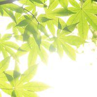 京都の初夏 - 深緑と苔と夜景【3】竹林も美しい圓光寺と、日本初のししおどしがある詩仙堂