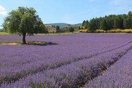 南仏の美しい村とラヴェンダー畑を巡る旅(11)《ソー高原》のラヴェンダー街道へ☆Sault