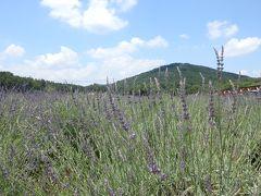 初夏の香りに癒される「千年の苑」 5万株のラベンダー園@嵐山(らんざん)町
