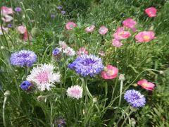 埼玉・大宮花の丘公苑のポピー2019~ポピー摘みができるお祭りとたくさんの花々~