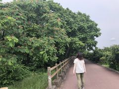 2019年06月 初夏の扶桑緑地公園を歩く