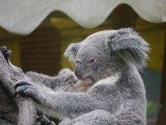 �最初で最後のバニラエア 大人も楽しめる台北市立動物園