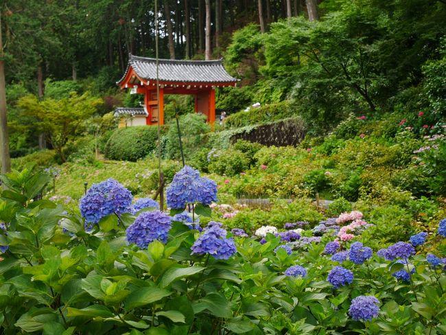 """転職して数か月、6月のシフトに連休が!<br /><br />やった!どこかへ行こう♪<br />6月で梅雨時だし…あじさいの季節。<br />去年は鎌倉に行ったから、今年は足を延ばして京都へ行ってみようかな。<br />(お寺・神社たくさんあるし、あじさい見れるよね…?)<br />と、思い立ち、日本旅行で新幹線とホテルのパッケージプランを直前に申し込んで1泊2日で行ってきました。<br /><br />まず、初日。<br />調べたところ京都中心部で""""あじさい寺""""と言えば三室戸寺が有名みたい。<br />宇治は行ったことないし、初日は宇治エリアを満喫しましょ。<br /><br />■■□1日目□■■<br />  三室戸寺<br />  平等院<br />  宇治上神社<br />■■□■■■□■■<br /><br />諸費用(大人1名1泊2日)<br />◆旅費(新幹線&ホテル) 27,200円<br />◆観光費(交通費&参拝料金) 約6,000円<br />◆食費 約5,000円<br />◆お土産・買い物 約4,000円<br />大人1名利用だと少し割高になるし、京都ってたったの1泊でもけっこうお金かかるな…"""