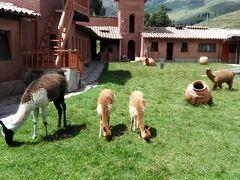 南米ツアー シニア夫婦ペルーとボリビアへ5 ペルー編� ラ・ラヤ峠を越えて