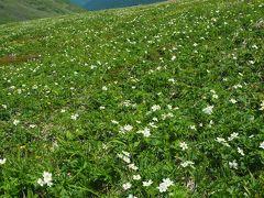 天空の花園へ ハクサンイチゲが満開の平標山日帰り登山