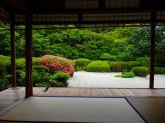 新緑に悠々と紅映える寺の庭