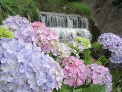 流れに添い咲け 天の川☆彡