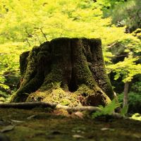 京都の初夏 - 深緑と苔と夜景【6 - Fin -】やっぱり流石「南禅寺」深緑も苔も素晴らしい!