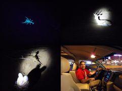 二人のバースディ旅行ヽ(^o^)丿♪ in ドバイ その3 お土産買いにドバイモールへ & 夜の砂漠のドライブで動物を見つけよう!