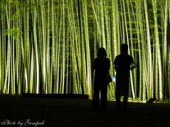 映画ロケやCM撮影で重宝されている宇都宮の美竹林