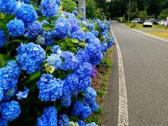 400種類の鮮やかな紫陽花が彩る~みちのくあじさい園~