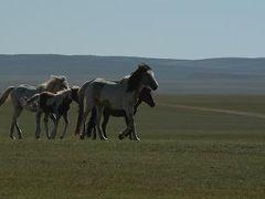 モンゴル歴史探訪 幻のチンゲス・ハン廟を訪ねて  前編