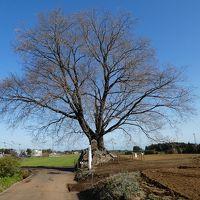 宮崎・鹿児島に春を訪ねて 1日目 桜と菜の花の共演はあるか?