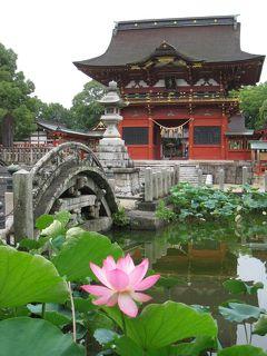 蓮の花咲く伊賀八幡宮と藤川宿(東海道五十三次37番目)⑤