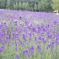 北海道の花旅 富良野へ 【2泊3日1日目】