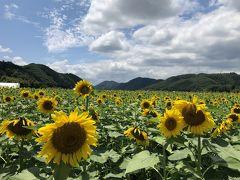 なんちゃってキャンプ旅~南光自然観察村~
