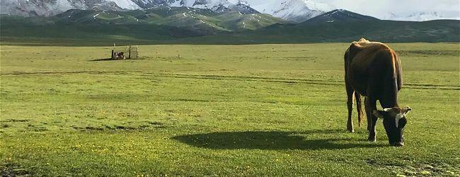 キルギスの大自然からサマルカンドの碧の...