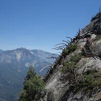 初めてのロサンゼルス2日目:セコイア国立公園日帰りツアー