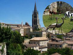 中世の美しい町並みと美味しいワインのサン・テミリオン2