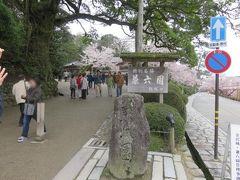 北陸路・飛騨路(23)桜満開の兼六園