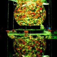 光と金魚がコラボするアートアクアリウム