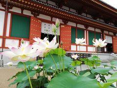 奈良一人散歩 2019初夏