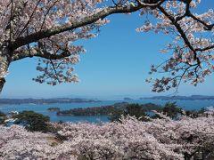 桜と松島湾と青空と・・コラボ絶景! ☆西行戻しの松公園☆
