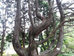 樹名板を探す旅 小石川植物園 東京大学大学院理学系研究科附属植物園